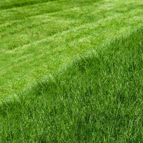 southland nature scapes lawn cutting